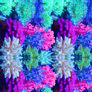 ReefPrint