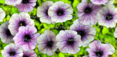Huge Petunias