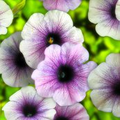 Rflowers1_shop_thumb