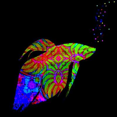 Neon Fish School:  Phylum Chordata Neon Rainbow