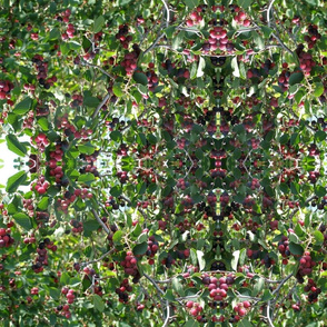 saskatoon berries saskatchewan prarie