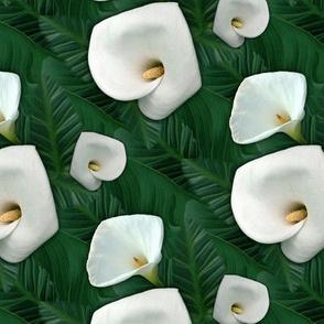 Calla lilies in foliage