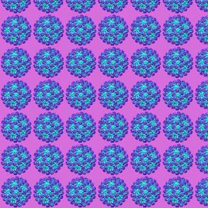 norovirus purple
