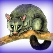 Rraustralia_-_another_brushtail_possum_ed_shop_thumb