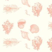 Rrrshells_delft_coral_shop_thumb