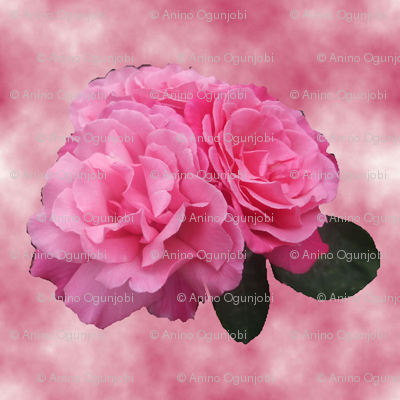 double_head_rose__in_cloud