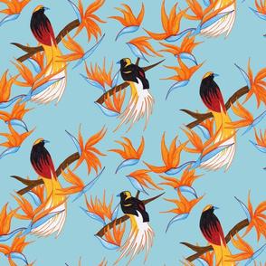 Birds of Paradise on Blue
