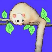 Rrraustralia_-_another_white_possum_ed_ed_ed_shop_thumb