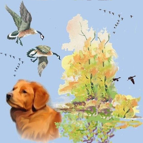 Duck toller and geese
