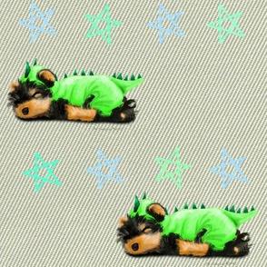 Yorkie Dragon M