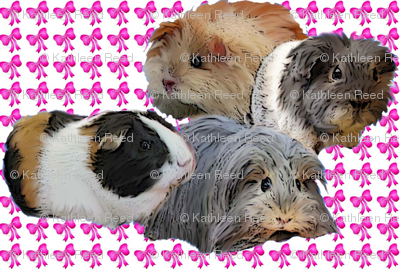 Guinea Pigs and Pink bows