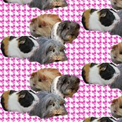 Rrr1303493_rrguinea_pig_fabric_shop_thumb