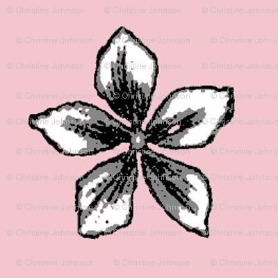 parisian pink jasmine