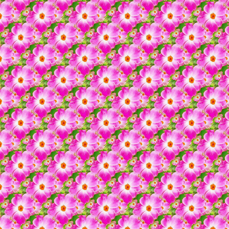 Rose Prelude fabric by donna_kallner on Spoonflower - custom fabric