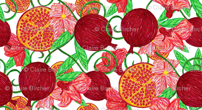 Pomegranate tree ~ white background