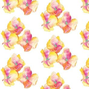 Amapolas Flowers