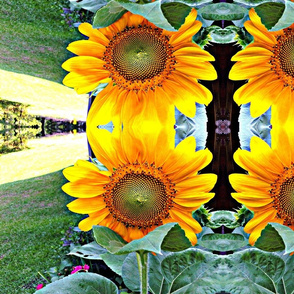 Sunflowers in my garden digitialy enhanced
