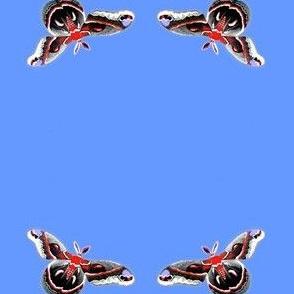 Cereus Moth in Yellow Springs