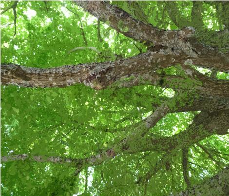 Chestnut Tree fabric by susaninparis on Spoonflower - custom fabric