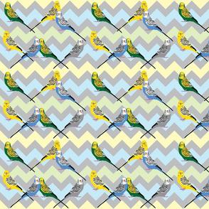 chevron-parakeets-multi2