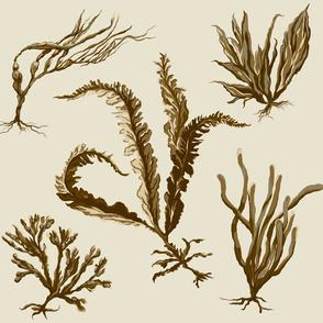 neutral_seaweed2