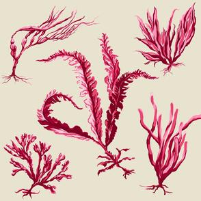 pink_seaweed2