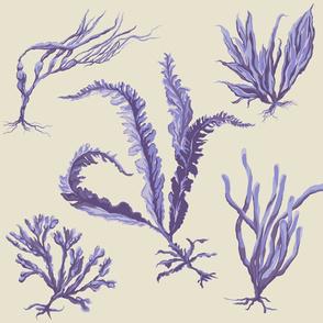 purple_seaweed2