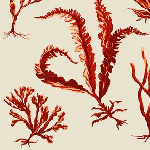 orangeseaweed2