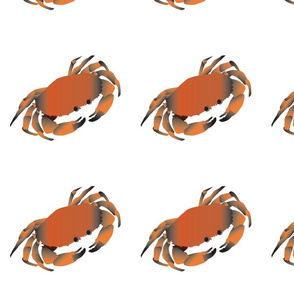 Red-Crab-Andrea-Brand