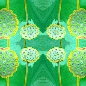 Lily Seed Pods