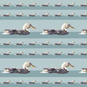 Duck-Andrea-Brand-Swatch