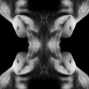 Barn Owl Diamond