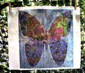 Rrcircus_butterfly_on_blue_resized_comment_197185_thumb