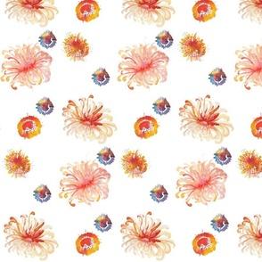 orange_anemones