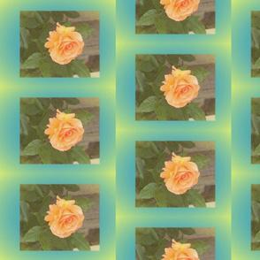 orange_rose_with_yellow