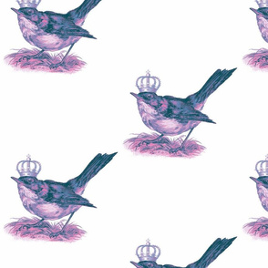 Crown Sparrow Pink/Turq