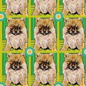 Pomeranian Bullseye