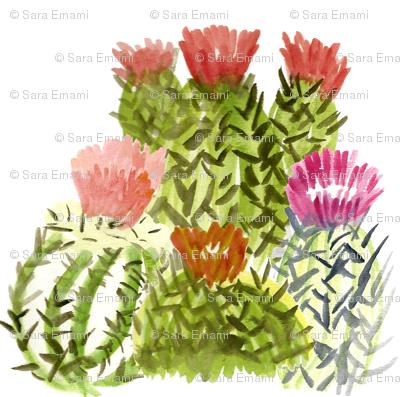 cactusfamily1