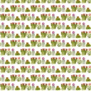 cactusfamily2