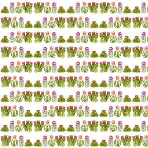 cactusfamily3