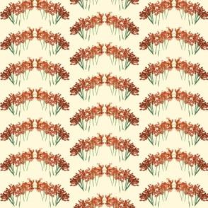 orangeflower-ed