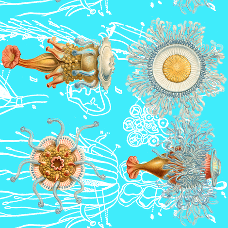 haeckel's critters fabric by craftyscientists on Spoonflower - custom fabric
