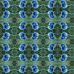 poppy_blue