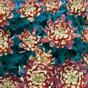 mirepoix market flowers