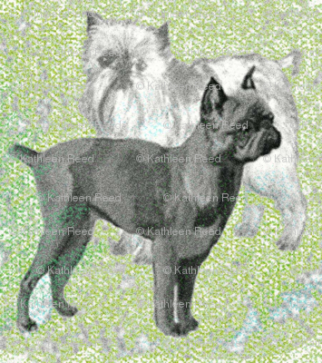 Brussels Griffon fabric