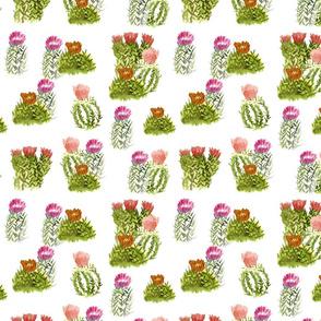 cactusfamily10