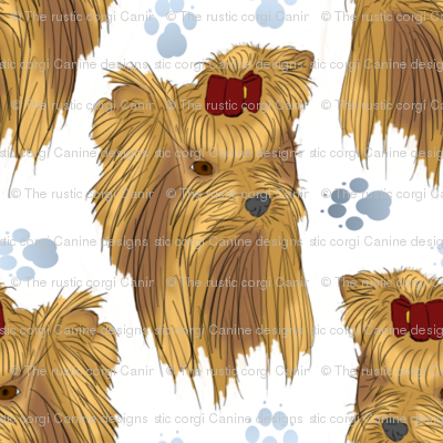 Yorkie faces and paws