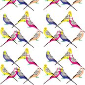 Rparakeets---bright_shop_thumb