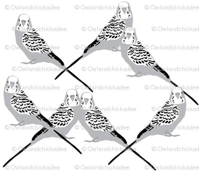 parakeets---gray