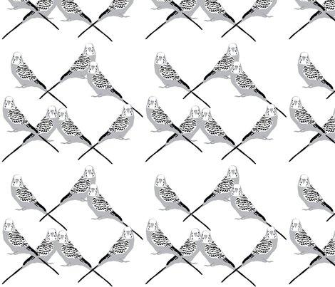 Parakeets---gray_shop_preview